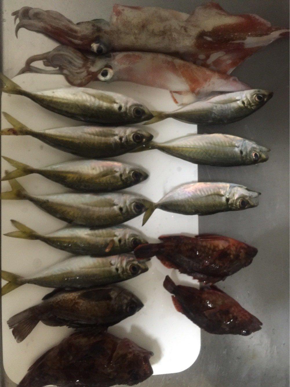 花京院典明さんの投稿画像,写っている魚はアジ