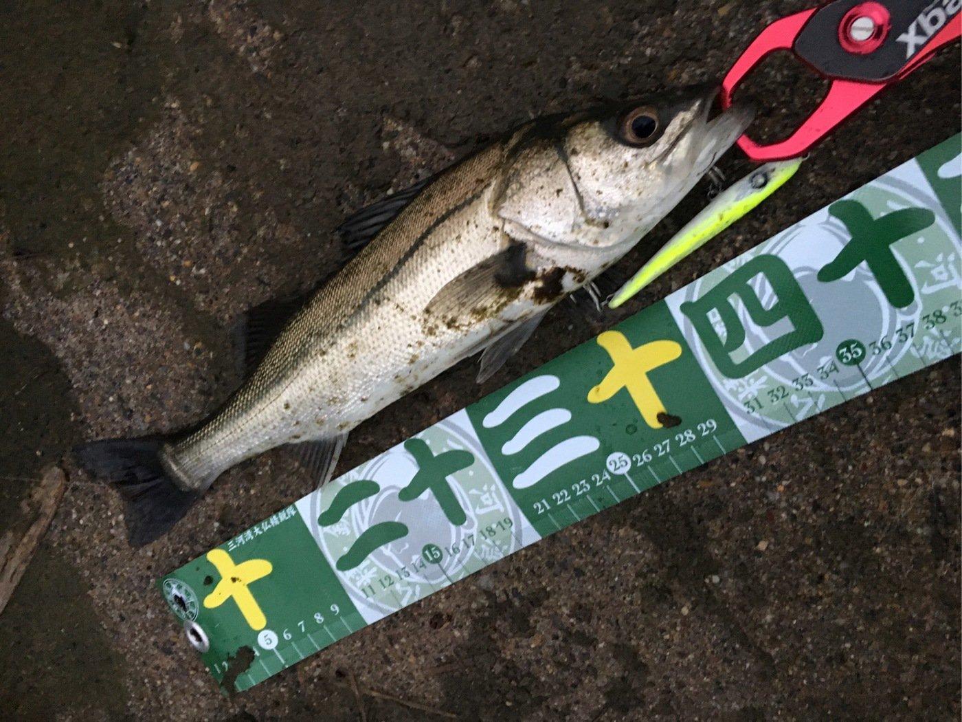 MIKAWA星魚'sさんの投稿画像,写っている魚はスズキ