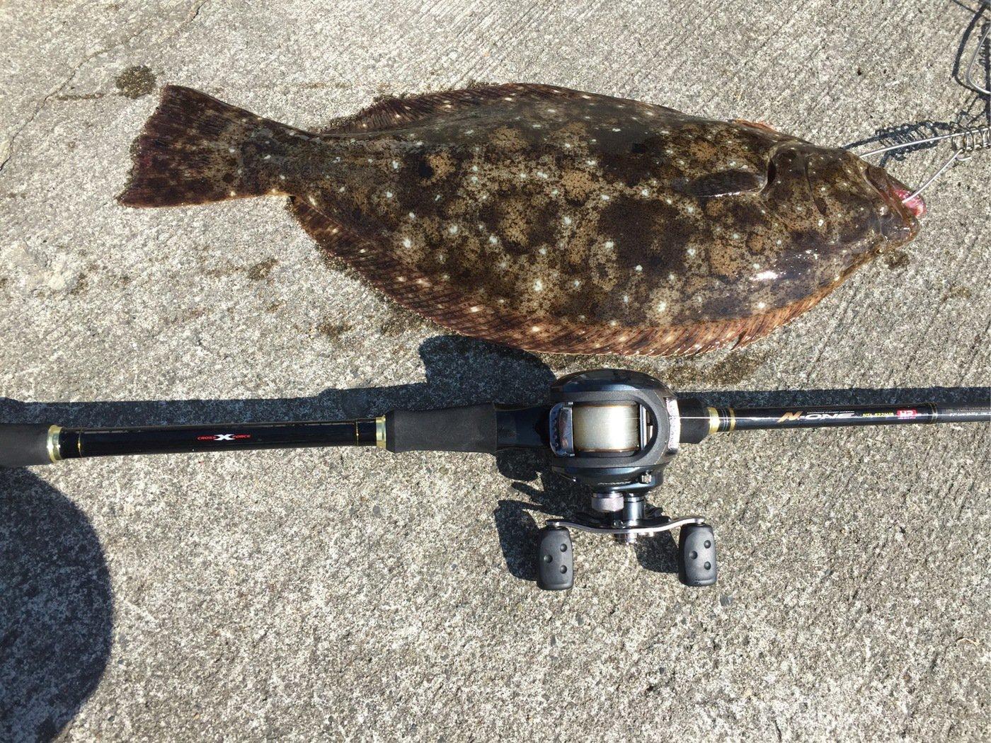 kasai1116さんの投稿画像,写っている魚はヒラメ