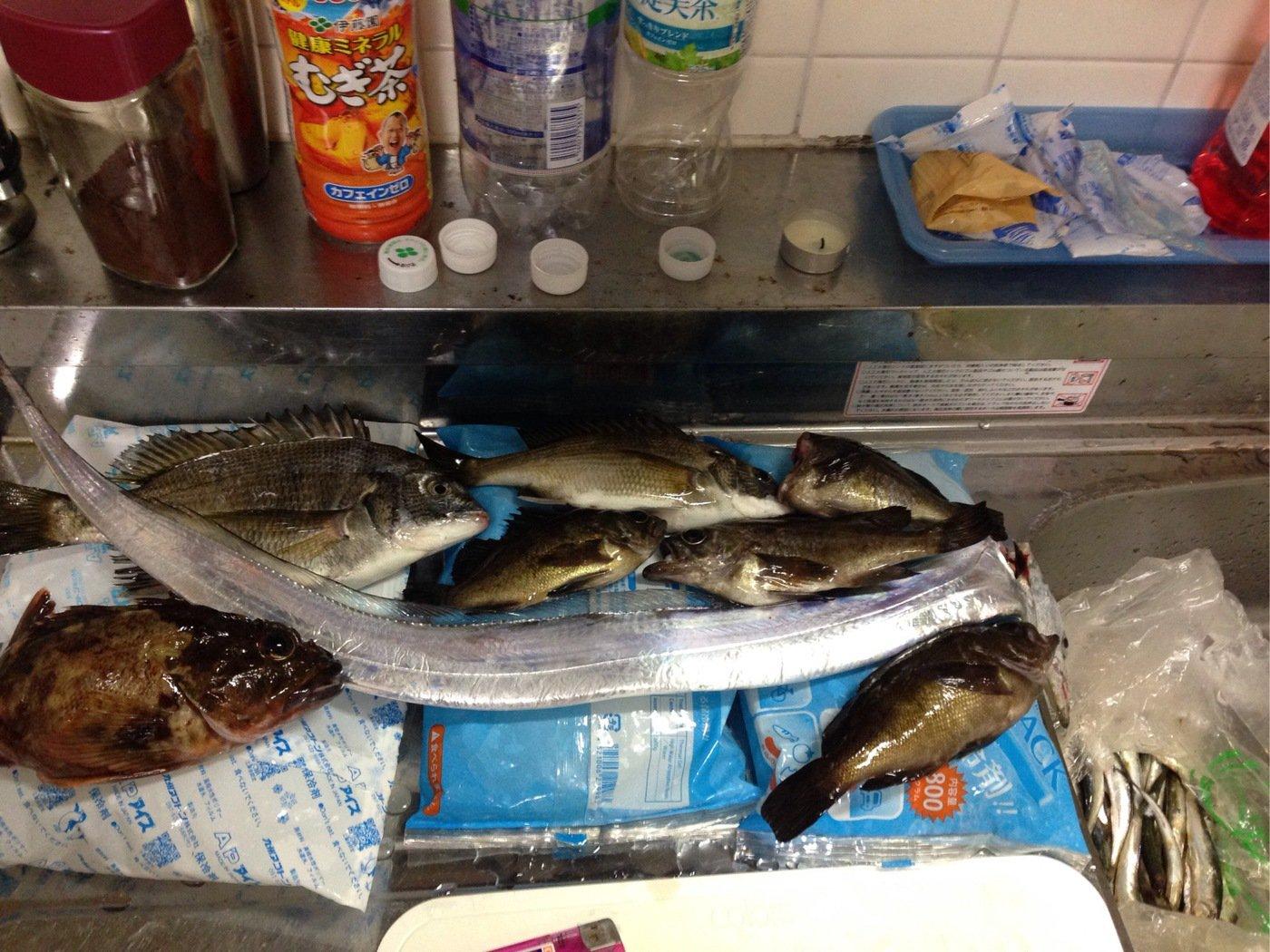 たんたんさんの投稿画像,写っている魚はタチウオ