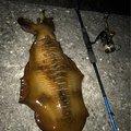 ブルーさんの三重県南牟婁郡での釣果写真