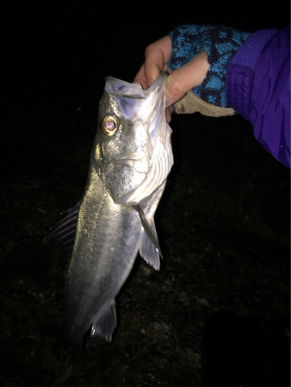 tkさんの投稿画像,写っている魚は