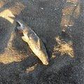 ひーさんの北海道樺戸郡での釣果写真