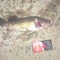 youさんの北海道厚岸郡での釣果写真