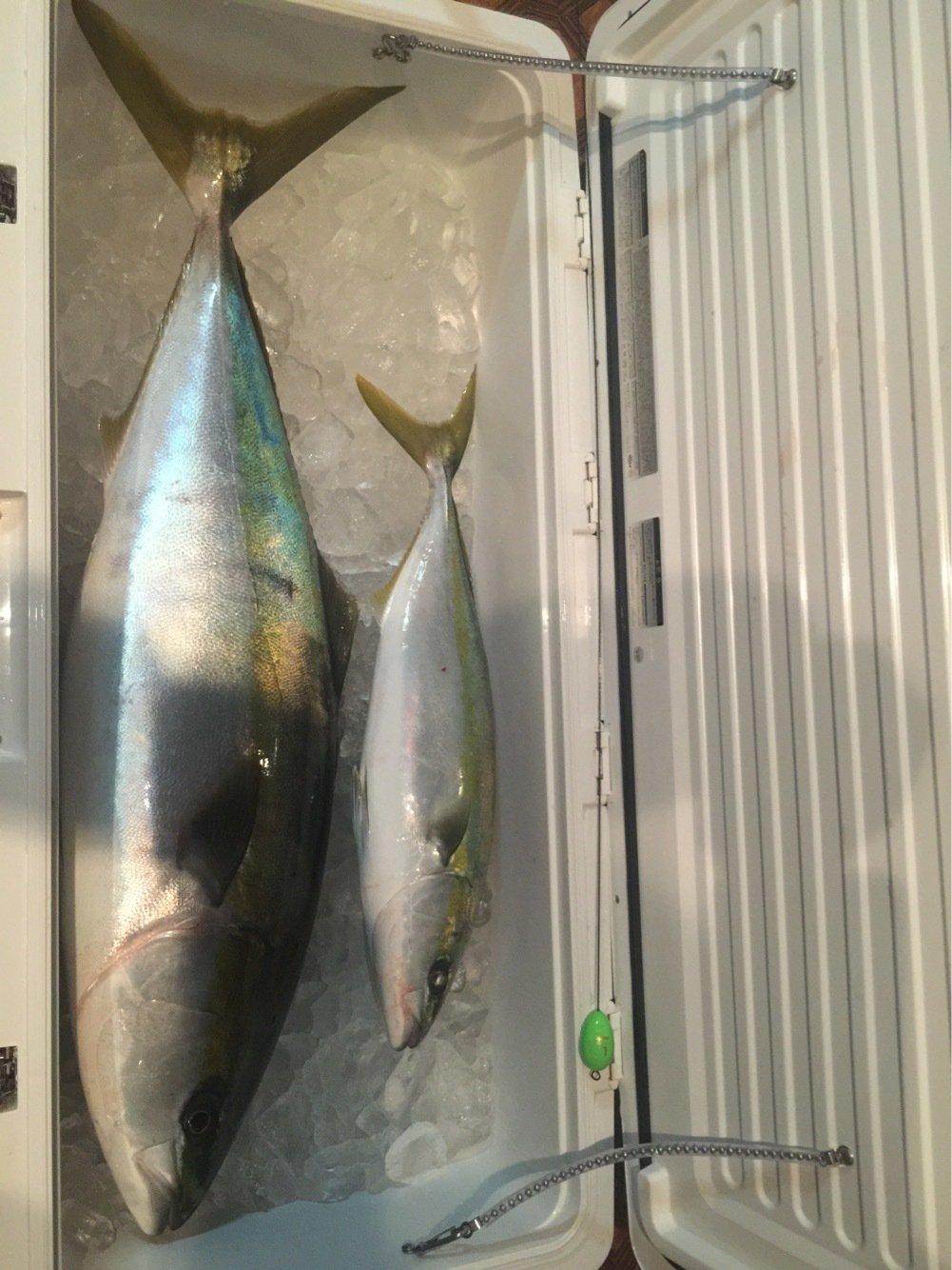 Redhorseさんの投稿画像,写っている魚はブリ