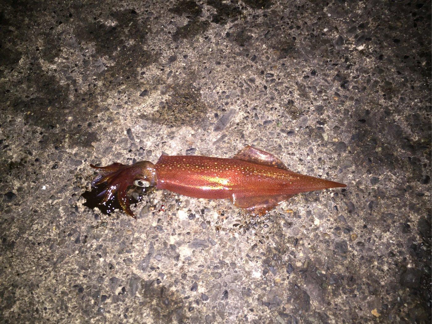 Tomoさんの投稿画像,写っている魚は