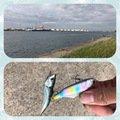 センチョーさんの茨城県神栖市でのマサバの釣果写真