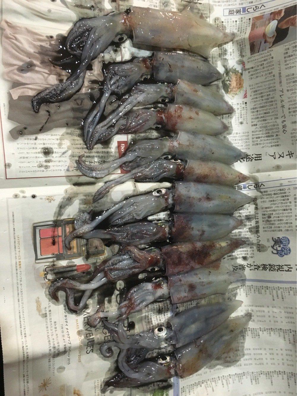 長飛丸さんの投稿画像,写っている魚はケンサキイカ