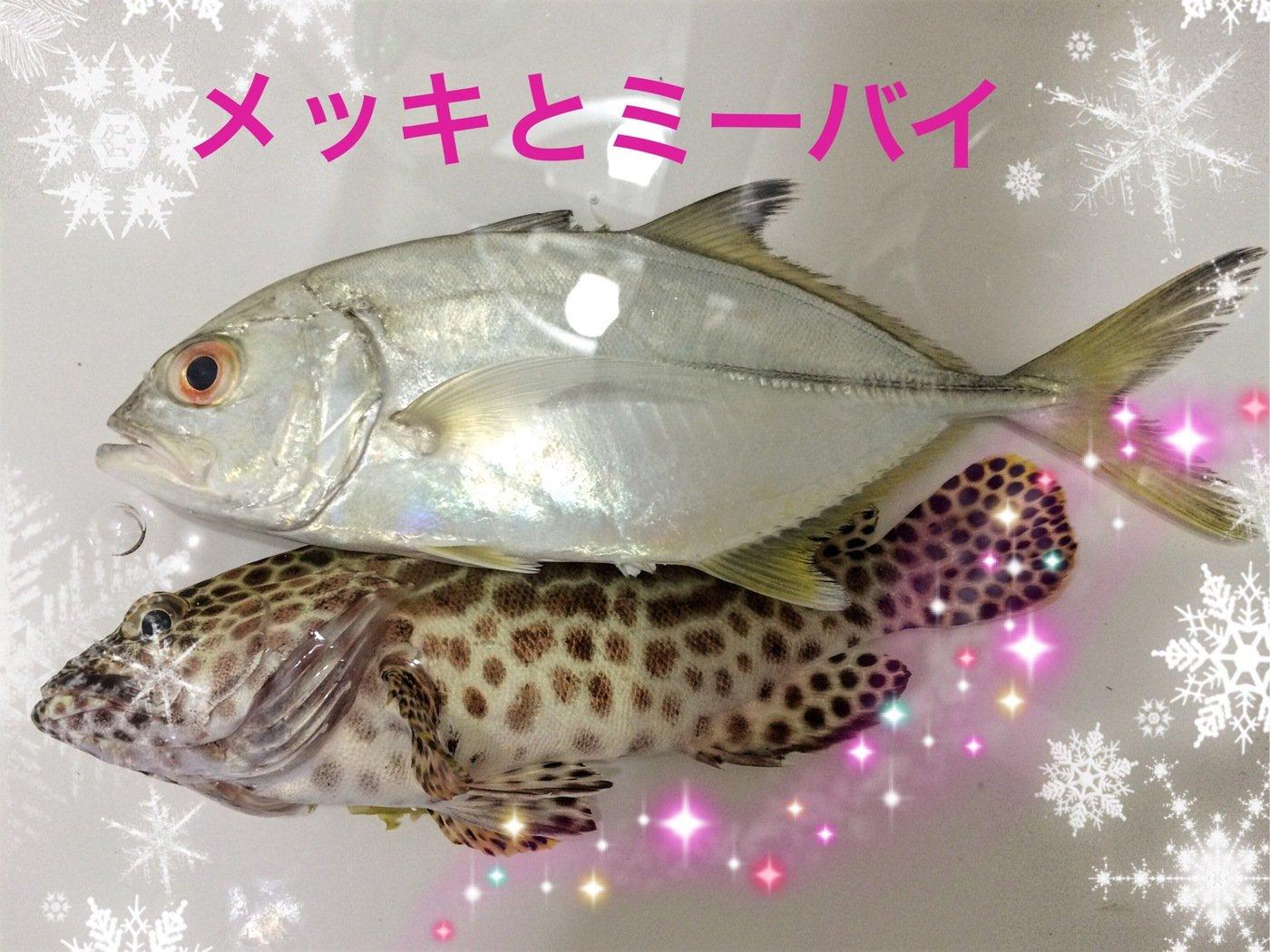 マカロンさんの投稿画像,写っている魚は