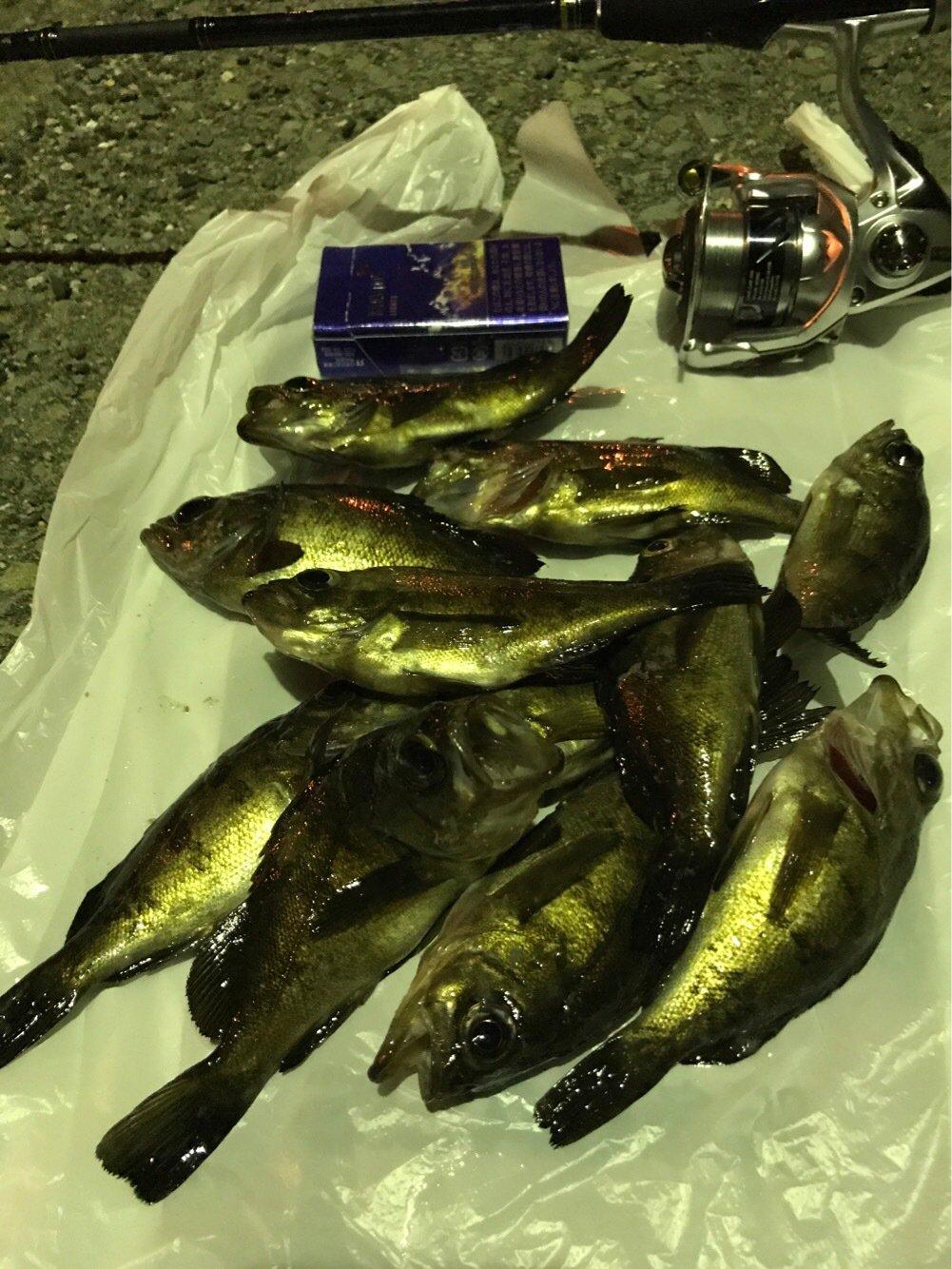 カズピトさんの投稿画像,写っている魚はメバル