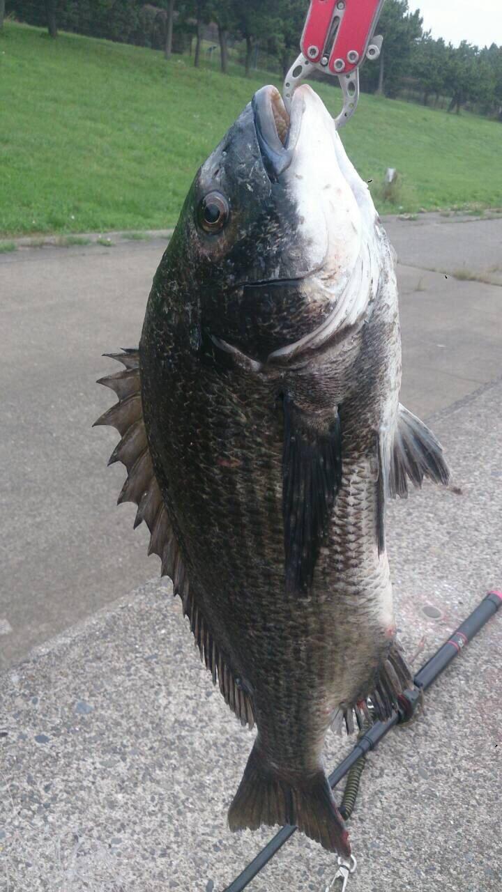 エスカさんの投稿画像,写っている魚はクロダイ