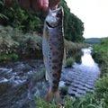 peishunさんの北海道北広島市での釣果写真