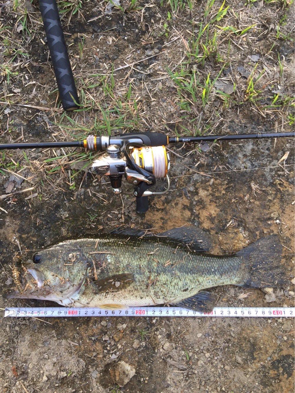 ユージンさんの投稿画像,写っている魚はブラックバス