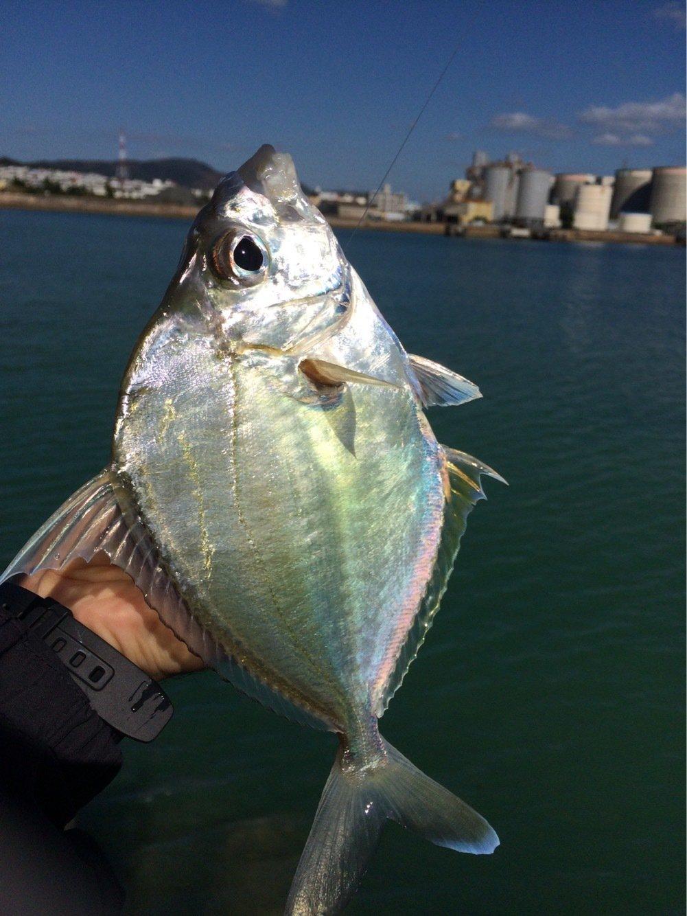 yamachaaanさんの投稿画像,写っている魚は
