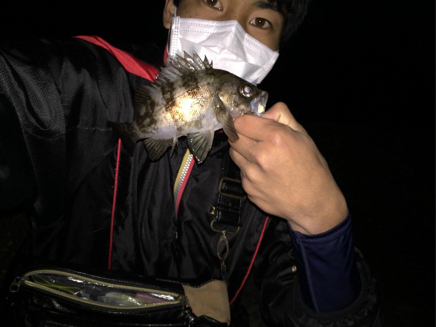 はっしーさんの投稿画像,写っている魚はメバル