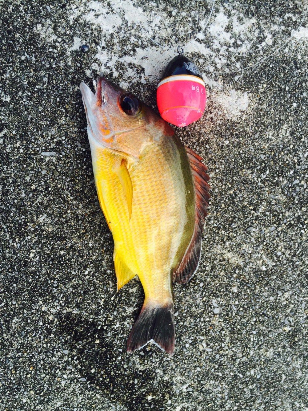 たつきさんの投稿画像,写っている魚は