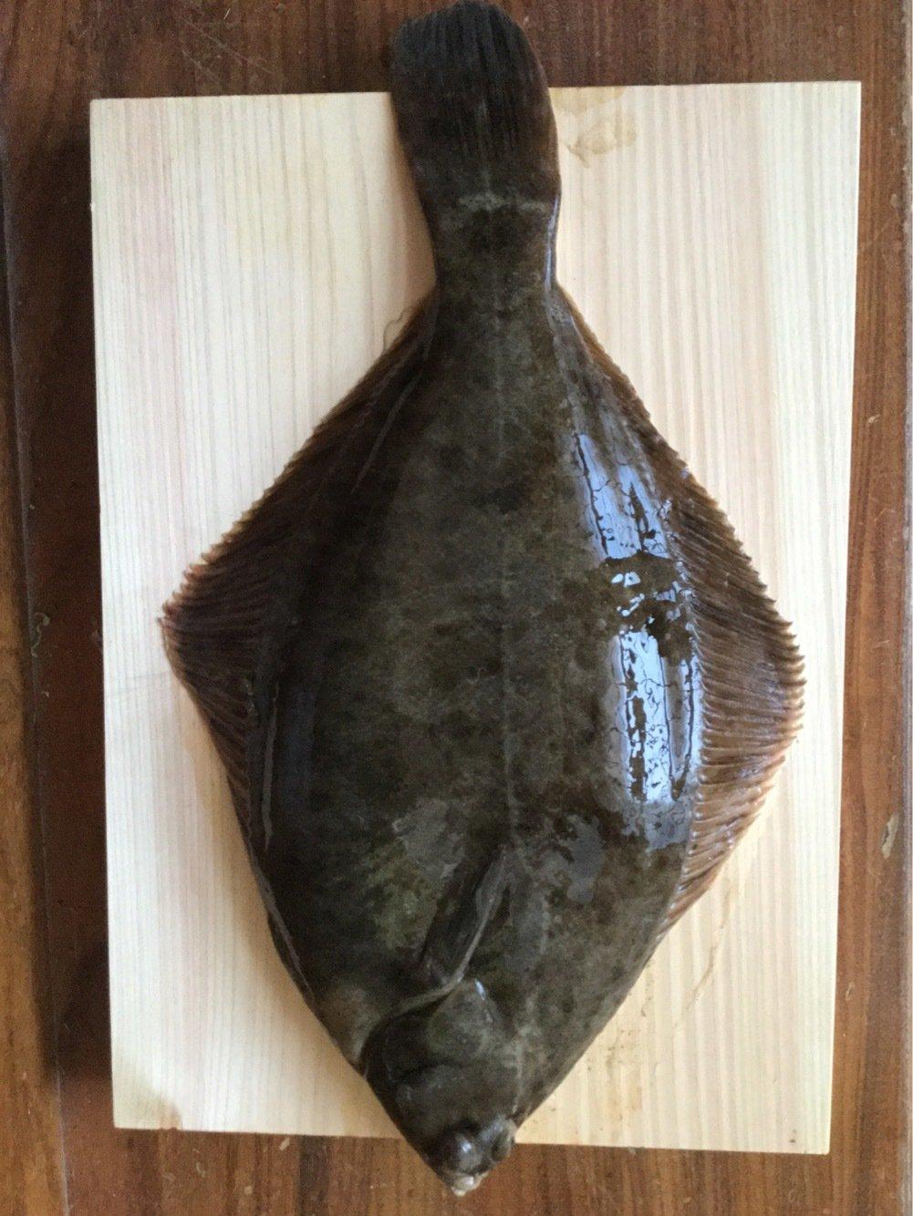 青物大好きさんの投稿画像,写っている魚はカレイ