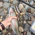 釣りバカさんの北海道北見市での釣果写真