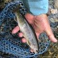 ヤッシーさんの長野県松本市での釣果写真