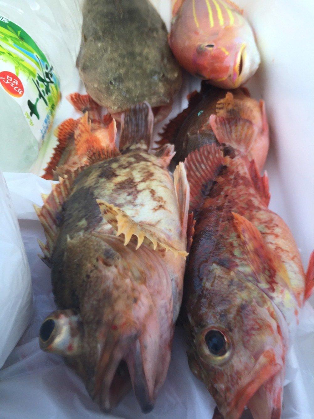 sJimさんの投稿画像,写っている魚はカサゴ