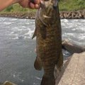 ドゥーキーさんの埼玉県鴻巣市での釣果写真