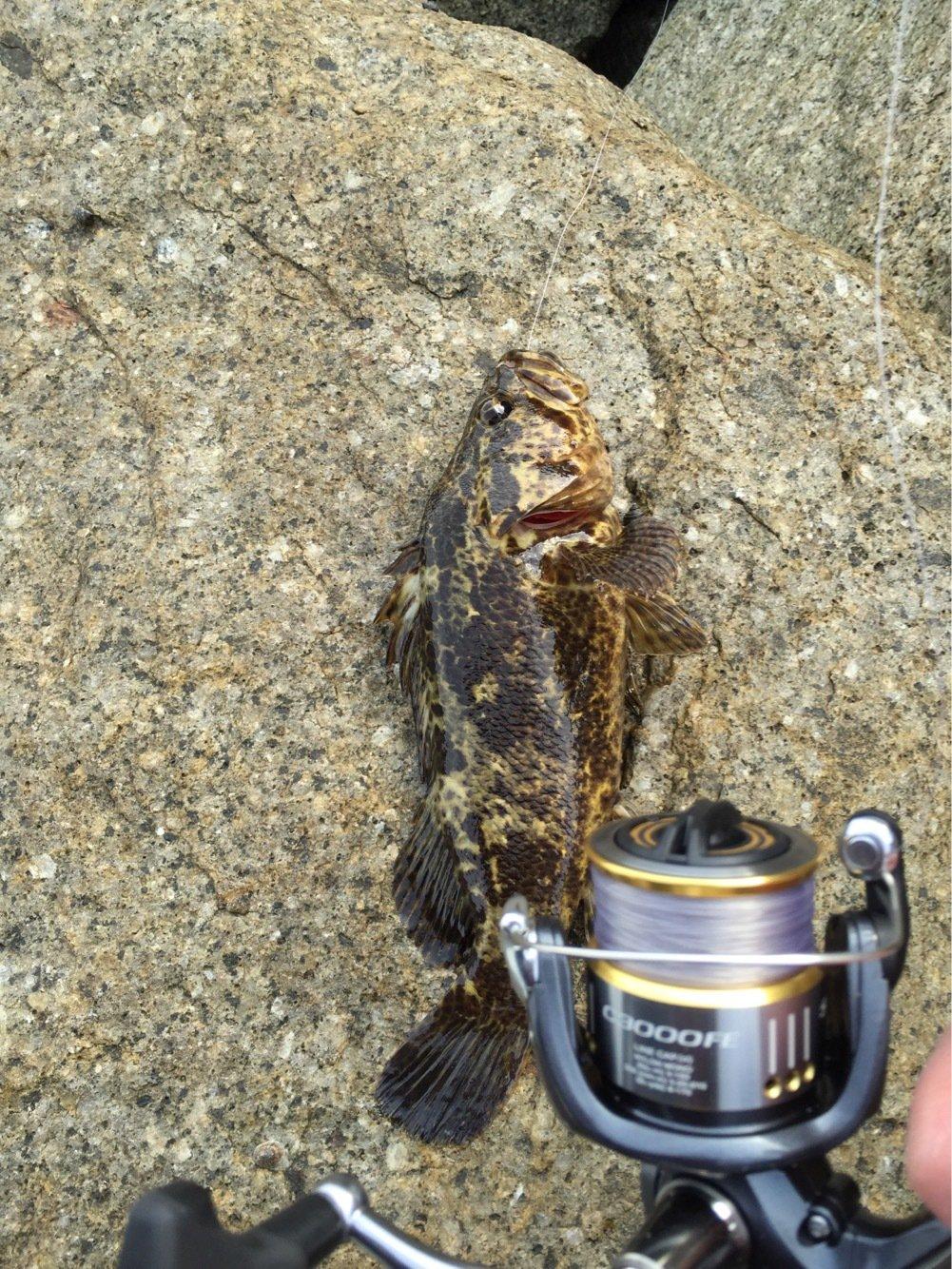 嫌韓女の子サーファーさんの投稿画像,写っている魚は