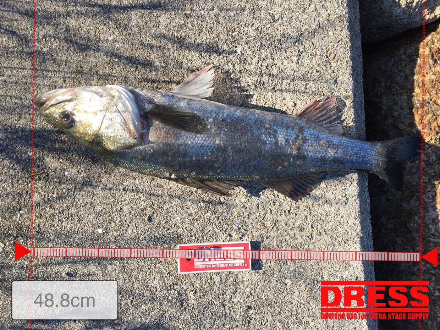 マサちゃんさんの投稿画像,写っている魚はスズキ
