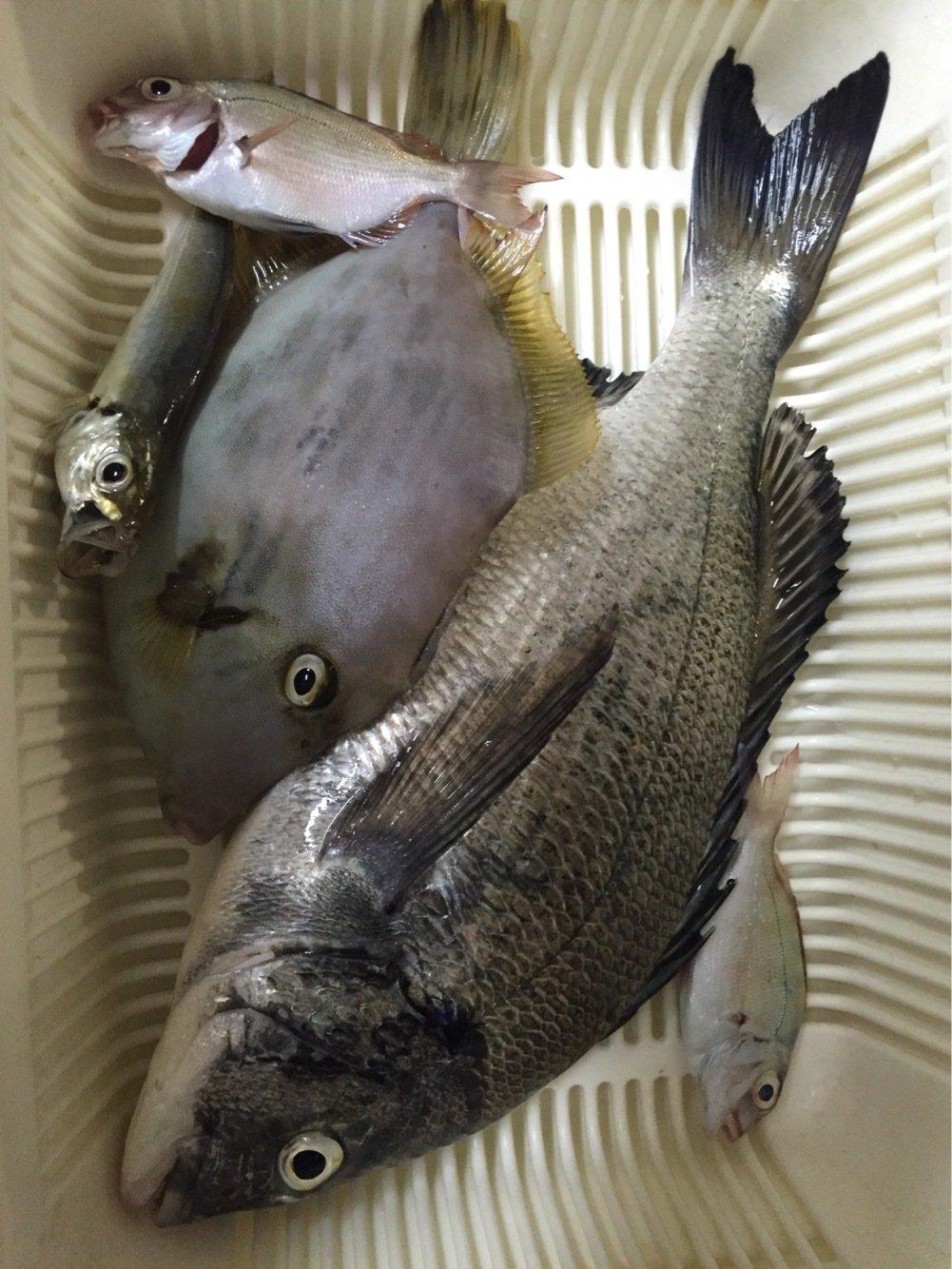 およさんの投稿画像,写っている魚は