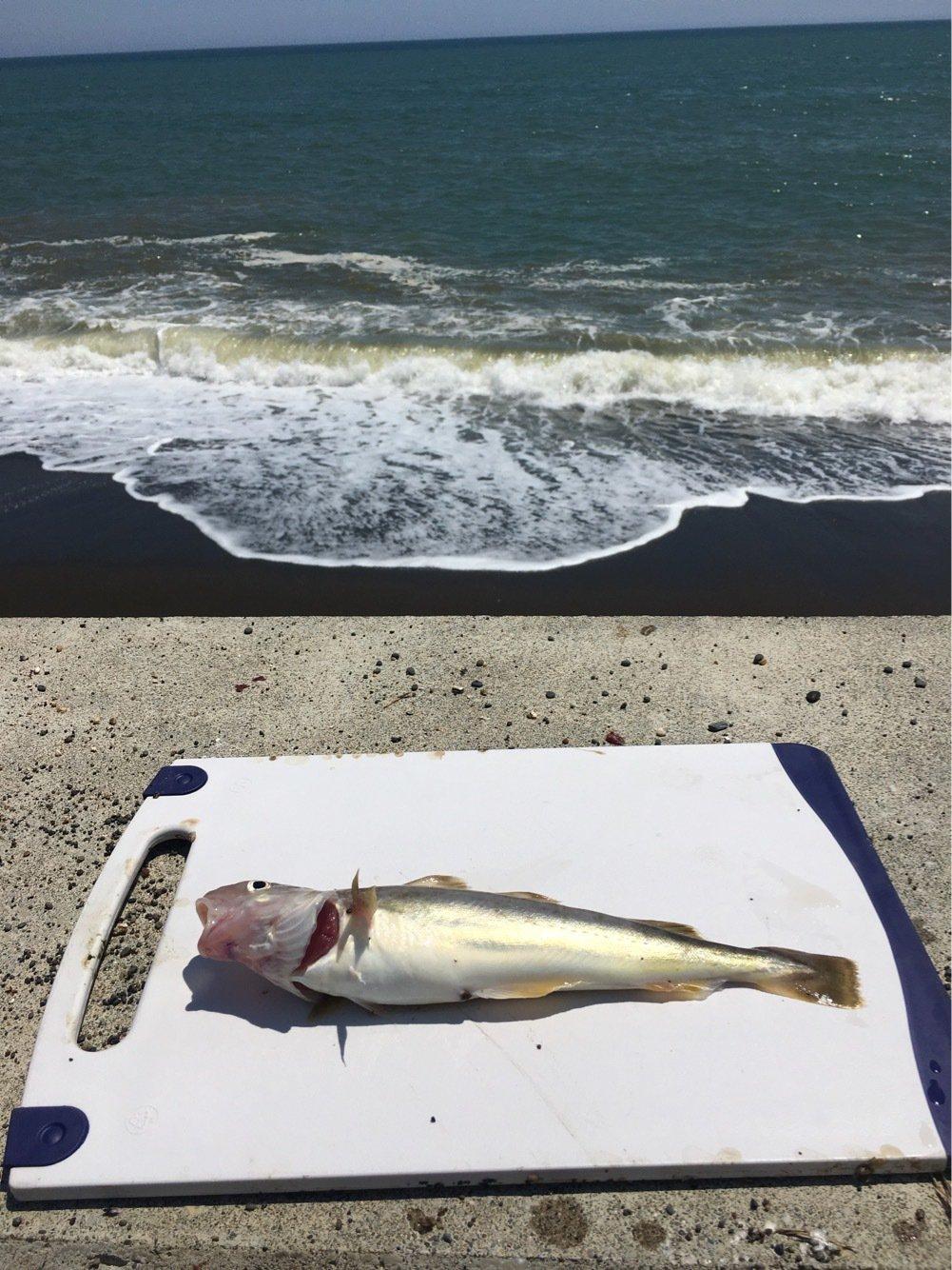 たぬき猫さんの投稿画像,写っている魚は