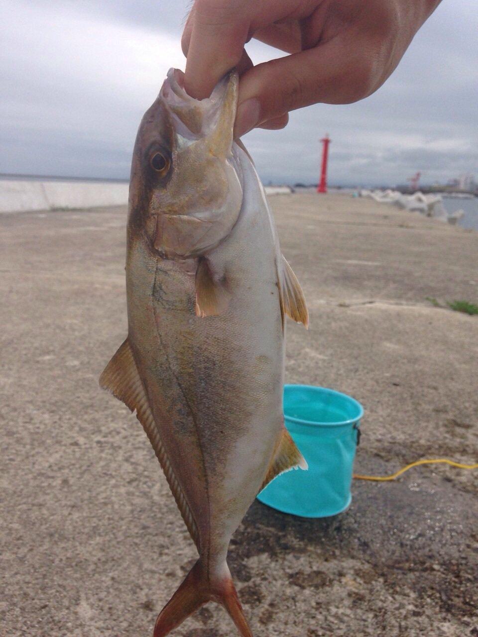 Tommyさんの投稿画像,写っている魚はカンパチ