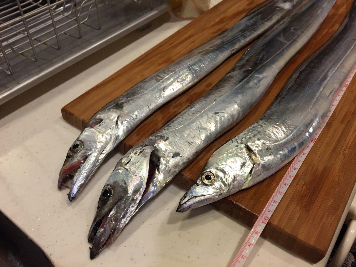ココパパさんの投稿画像,写っている魚は