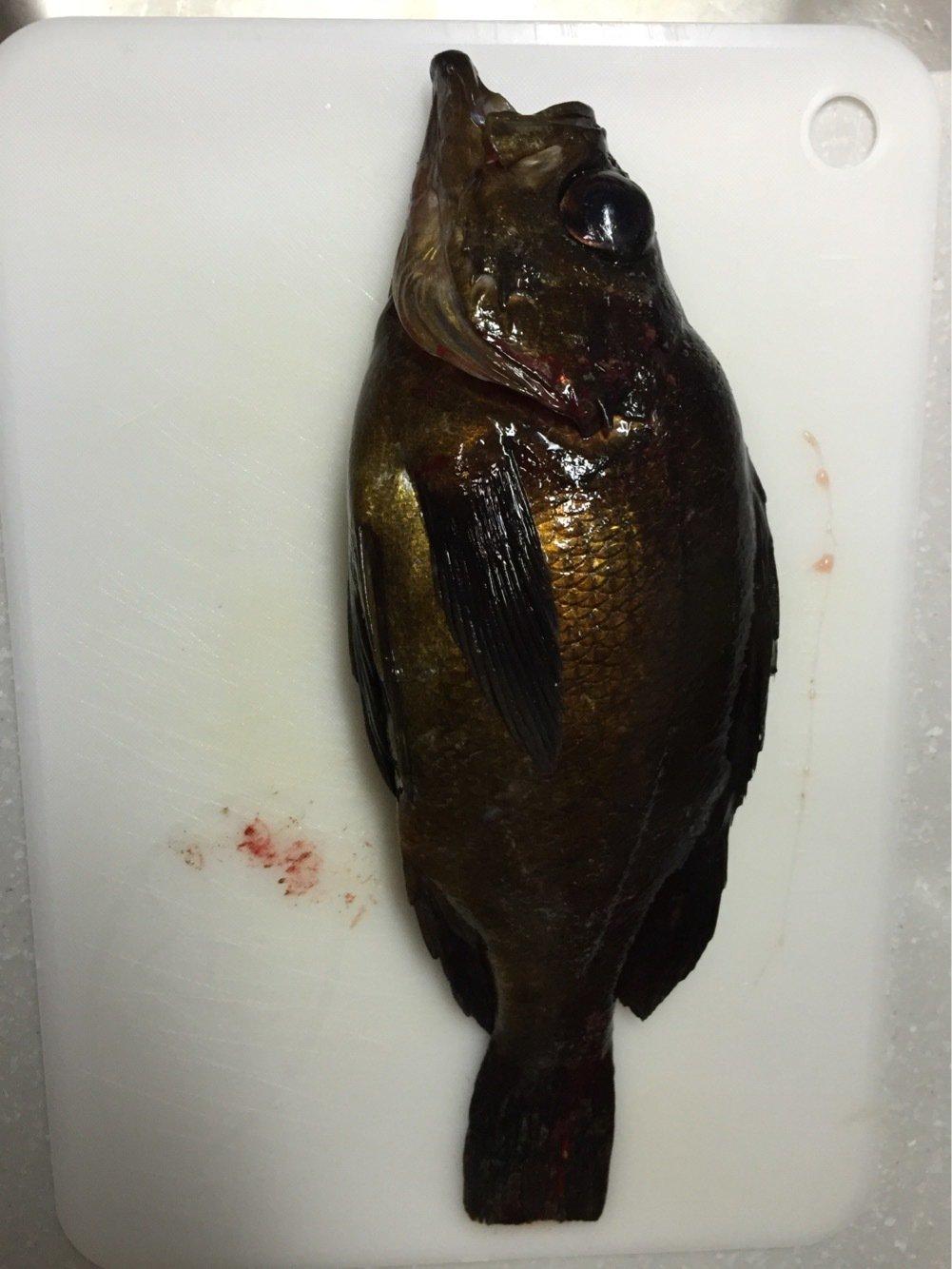 ピースケさんの投稿画像,写っている魚はクロメバル