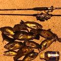 カズピトさんの兵庫県尼崎市でのメバルの釣果写真