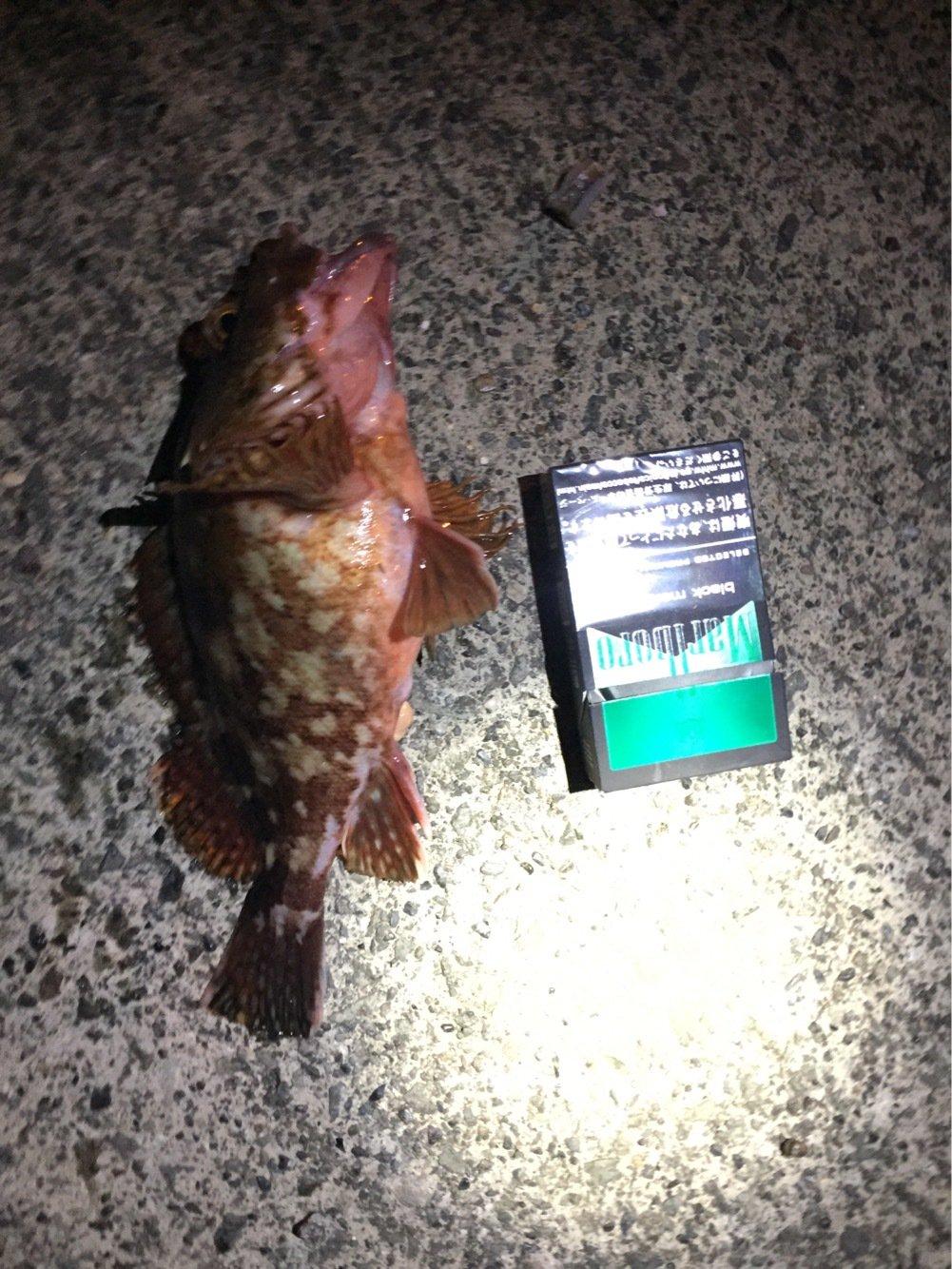 りゅうしんさんの投稿画像,写っている魚はカサゴ