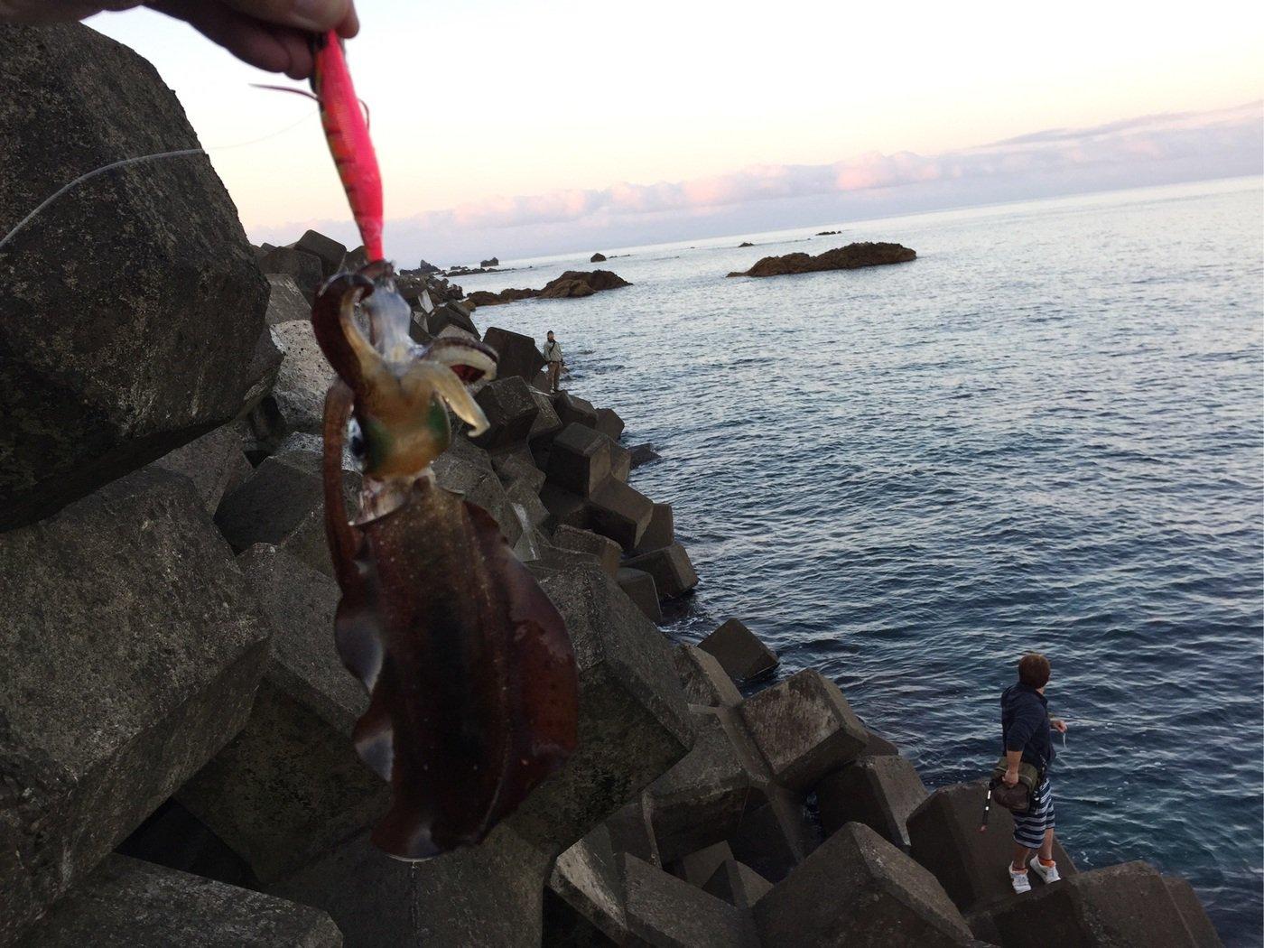 cpcnv100さんの投稿画像,写っている魚はアオリイカ