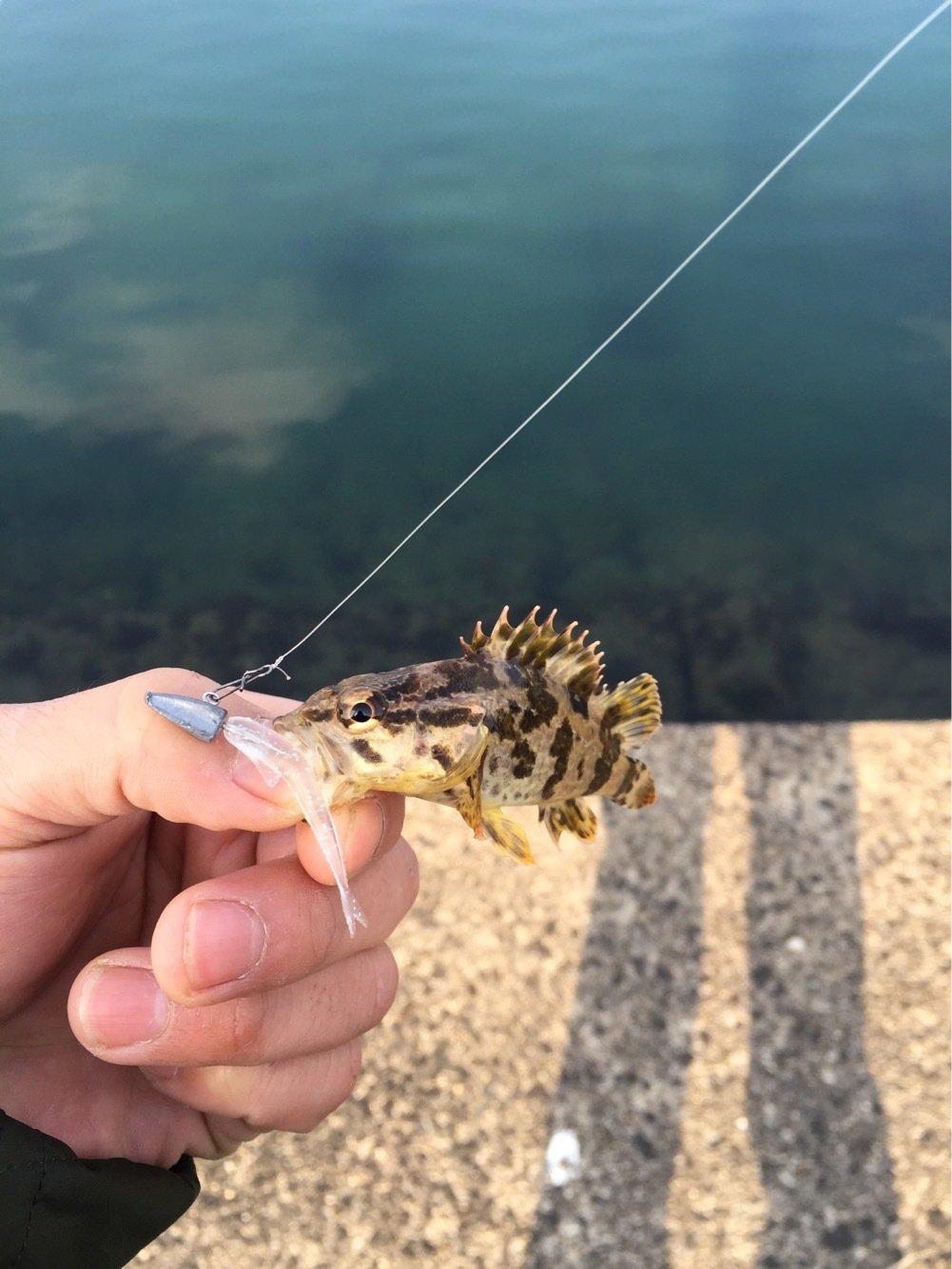 らたちゃんさんの投稿画像,写っている魚はタケノコメバル