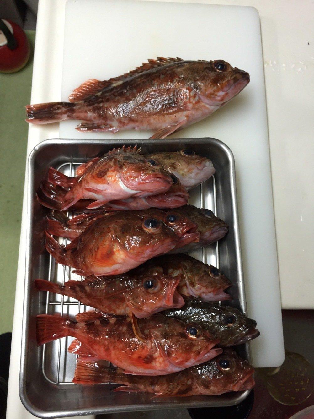 ひろひさんの投稿画像,写っている魚はカサゴ