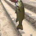 isanさんの山形県寒河江市での釣果写真
