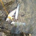 kou111さんの山形県西村山郡での釣果写真
