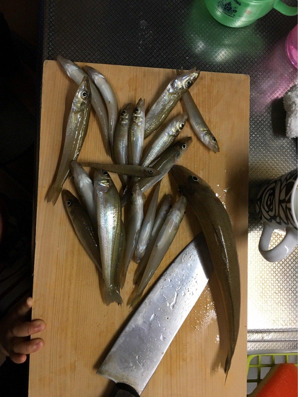さちだんさんの投稿画像,写っている魚はシロギス