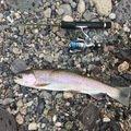 たぬき猫さんの北海道河東郡での釣果写真