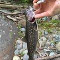 isanさんの山形県西村山郡での釣果写真