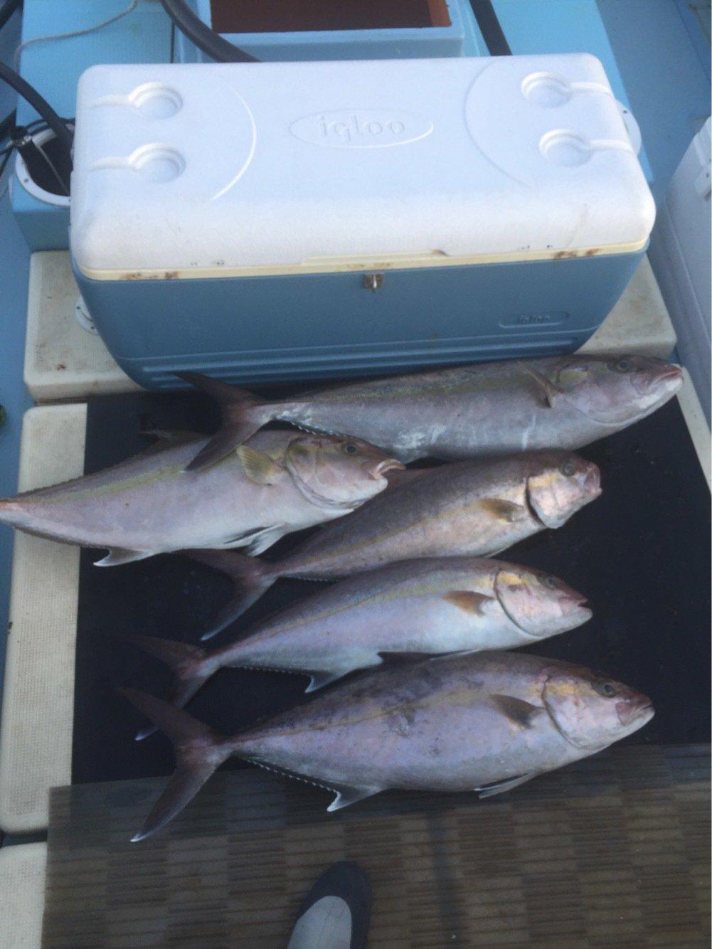波夢散道さんの投稿画像,写っている魚はカンパチ
