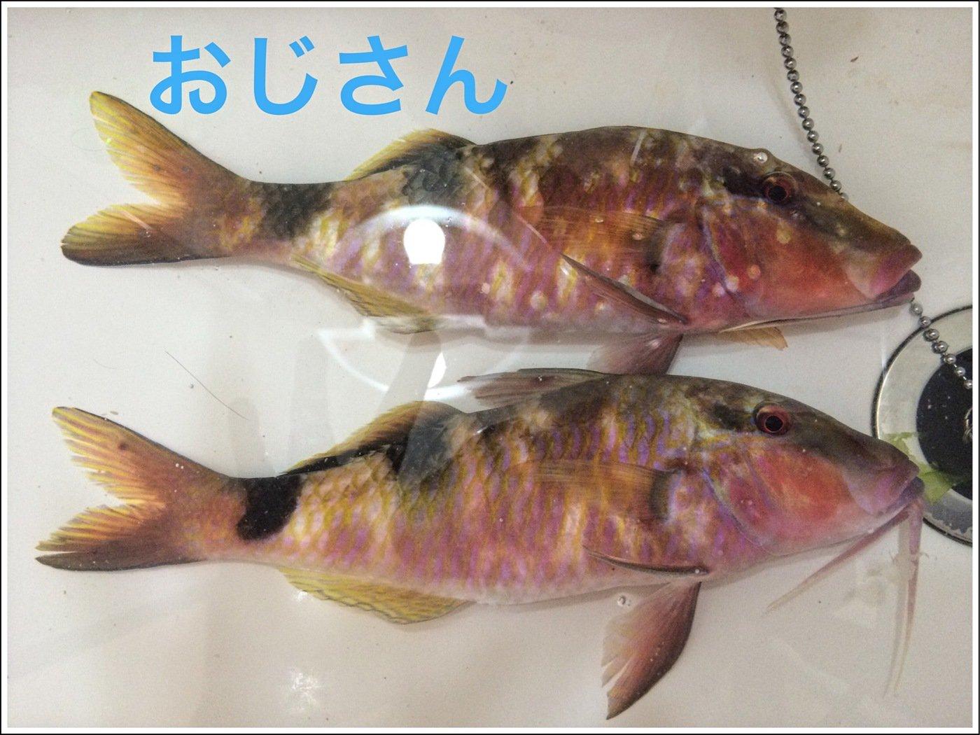 マカロンさんの投稿画像,写っている魚はオジサン