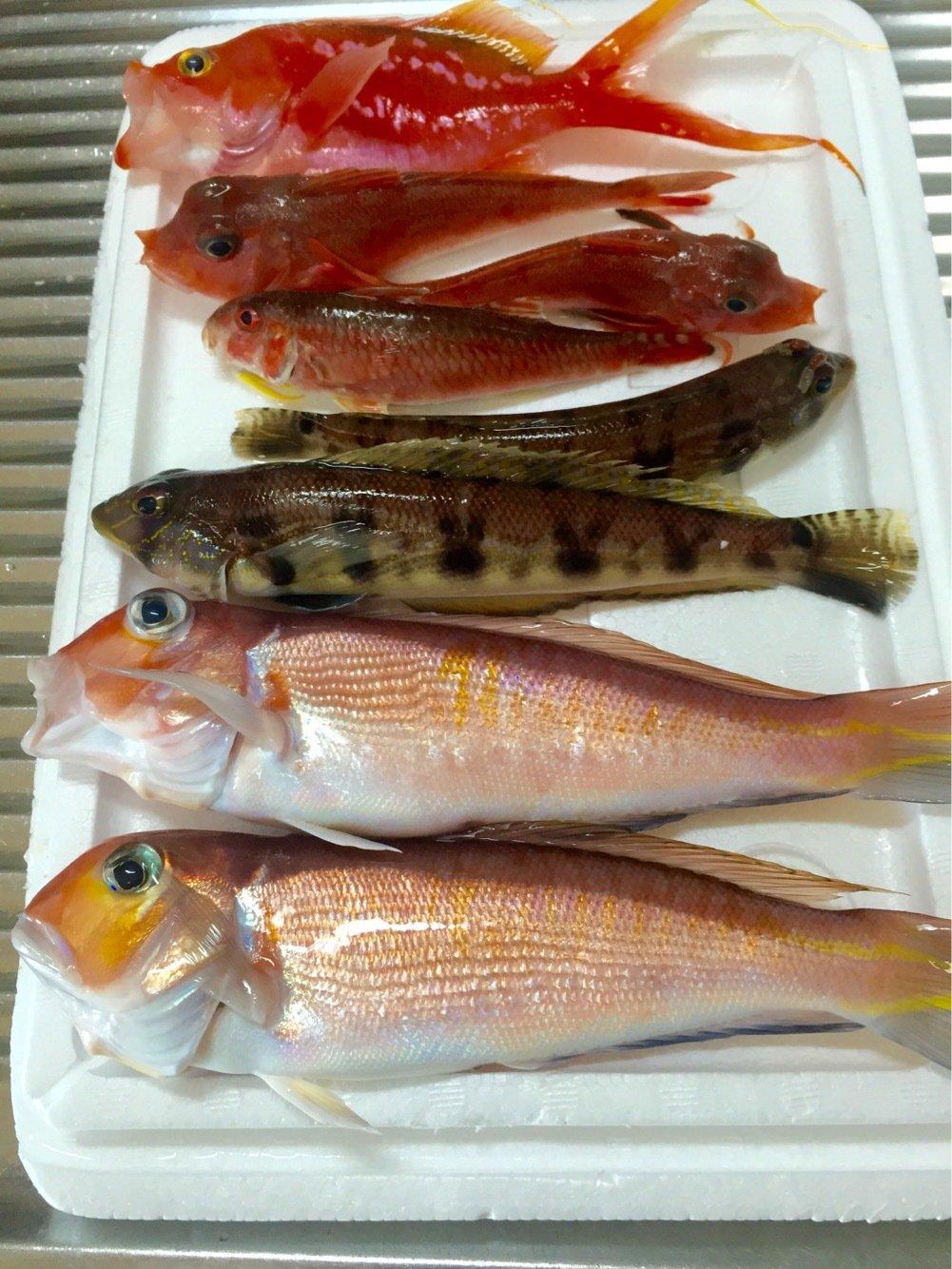 長嶋賢治さんの投稿画像,写っている魚はアマダイ