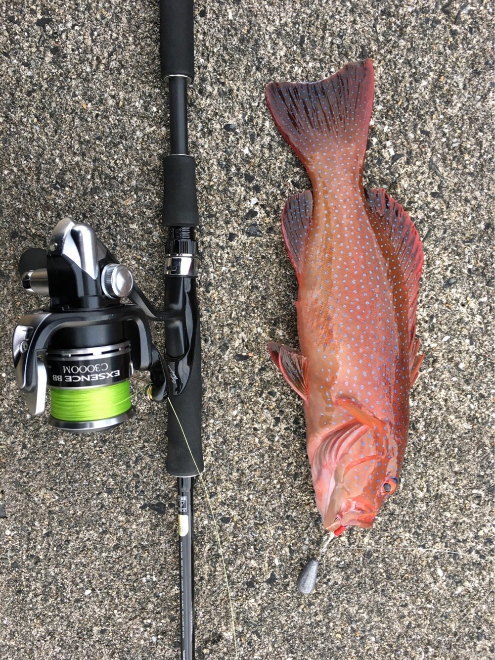 大五郎さんの投稿画像,写っている魚はスジアラ