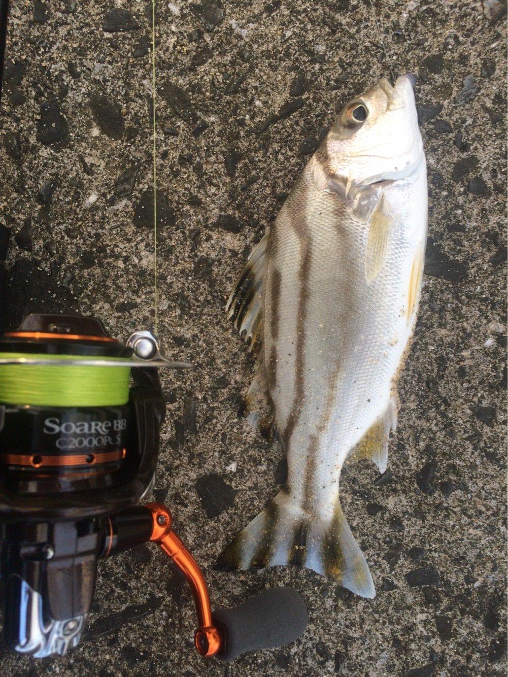 大五郎さんの投稿画像,写っている魚はコトヒキ