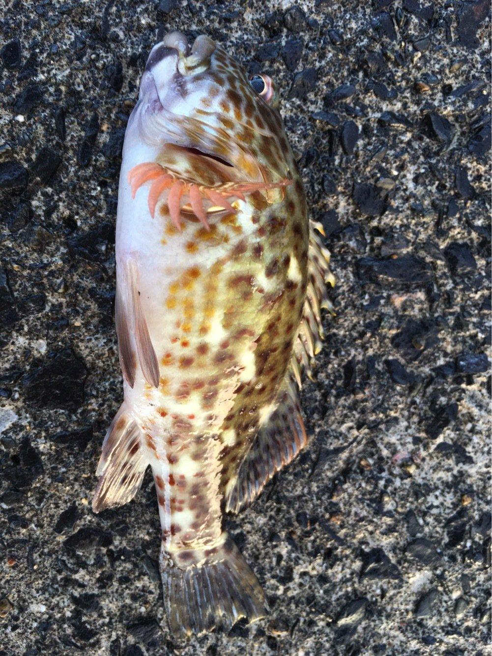 大五郎さんの投稿画像,写っている魚は