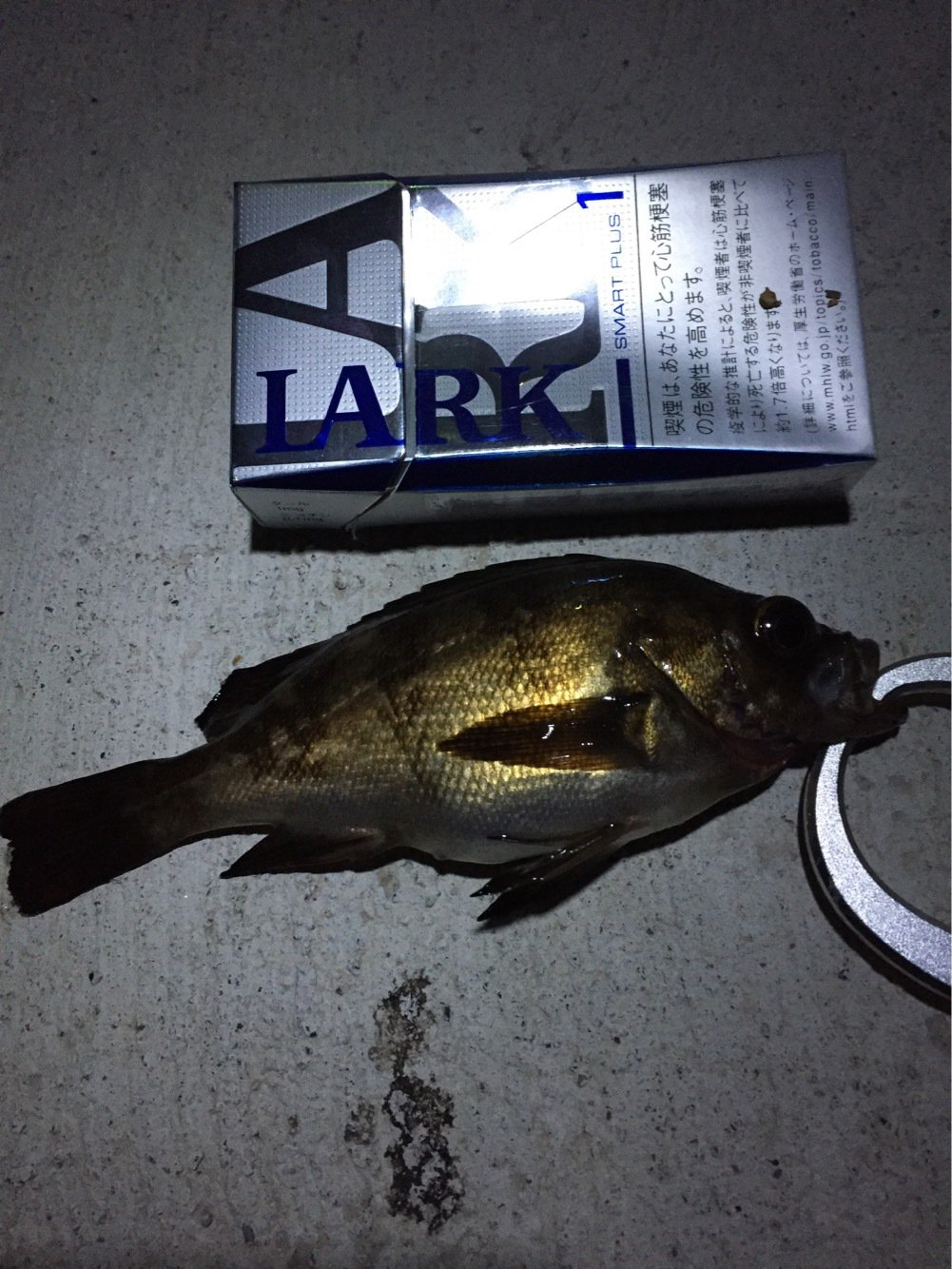 さっちゃんパパさんの投稿画像,写っている魚はシロメバル