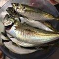 鯵1091さんの鳥取県東伯郡での釣果写真